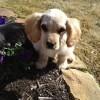 Puppy Alert!