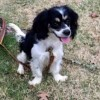 Molly #2
