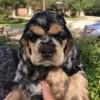 Puppy Annabelle
