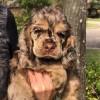 Puppy Noah