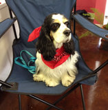 Rosie_in_chair.3.20