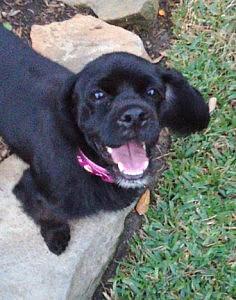 Callie2.smiling