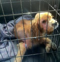 Noah in cage