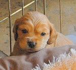 Puppy 8.12.13