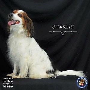 Charlie-new2