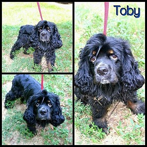 Toby-black and tan-before