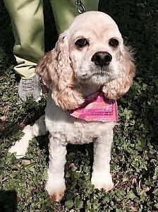 Daisy-new