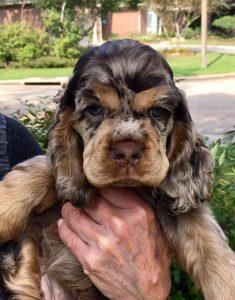 puppy-ariel