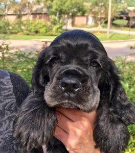 puppy-ryan